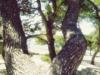 11-appartements-rosan-pakostane-dalmatien-kroatien