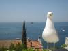 11-Sunny-Supetar-Vacation-Domina-otok-brac-hrvatska